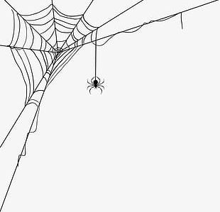 Spider Web Decoration Pattern PNG