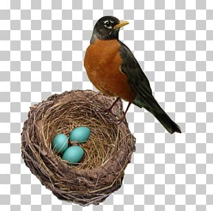 The Robin's Nest Bellingham Marketplace American Robin Bird Nest Person PNG