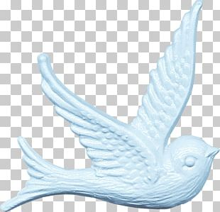 Wing Water Bird Feather PNG