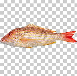 Northern Red Snapper Fish Products 09777 Oily Fish Salmon PNG