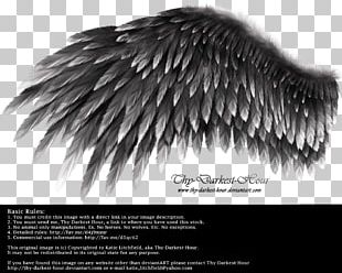 Wing YouTube White PNG
