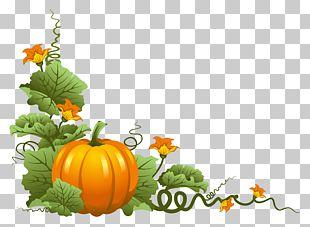 Thanksgiving Pumpkin PNG