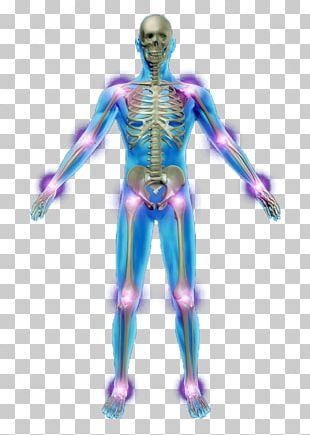 Human Skeleton Photography Anatomy Bone PNG