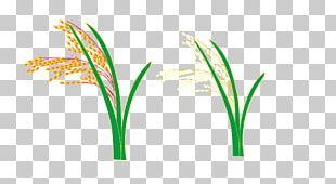 Logo Grasses Leaf Plant Stem Font PNG