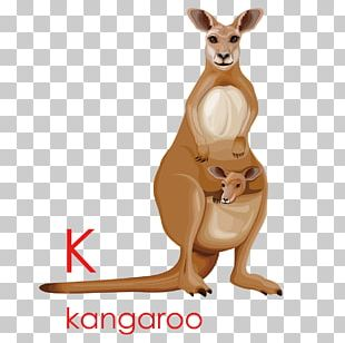 Kangaroo Cartoon Drawing Illustration PNG