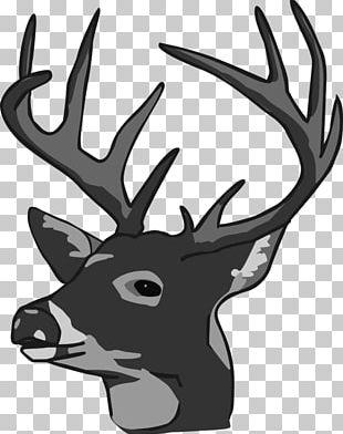 White-tailed Deer Reindeer Elk PNG