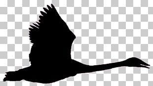 Bird Goose Black Swan Trumpeter Swan Flight PNG