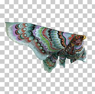 Butterfly Insect Pollinator Moth Invertebrate PNG