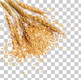 Wheat Grauds Bread PNG