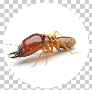 Ant Cockroach Termite Mosquito Pest Control PNG