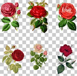 Garden Roses Art PNG