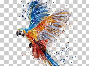 Parrot Watercolor Painting Drawing Art PNG