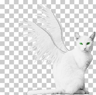 Turkish Van Turkish Angora Kitten Winged Cat PNG