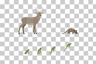 Reindeer Antler Fauna Wildlife PNG
