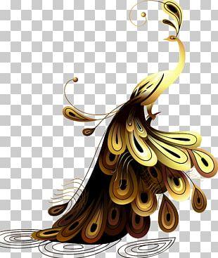 Peafowl Illustration PNG