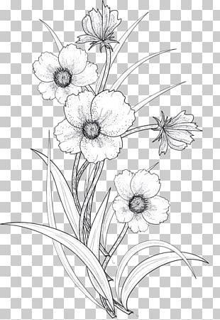 Drawing Flower Line Art PNG