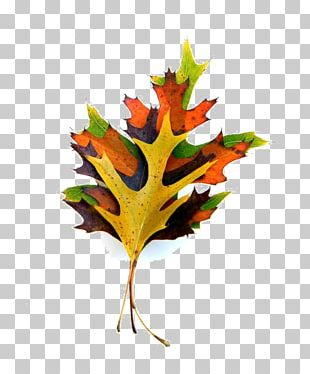 Maple Leaf Paper Autumn Leaf Color Plant Stem PNG