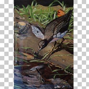 Beak Ecosystem Fauna Wildlife Tail PNG