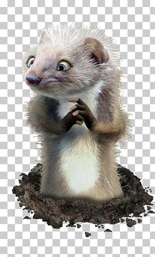 Ferret Marten Fur Mink Whiskers PNG