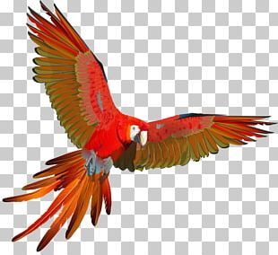 Scarlet Macaw Parrot Red-and-green Macaw Blue-and-yellow Macaw PNG