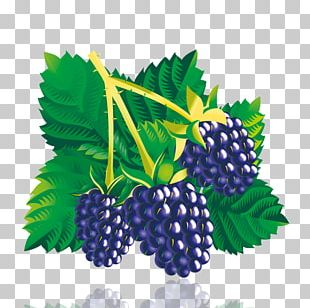 Mulberry PNG