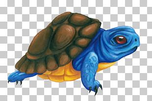 Box Turtle Tortoise Illustration PNG