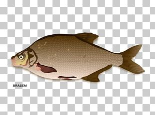 Northern Red Snapper Fish Products Carp PNG