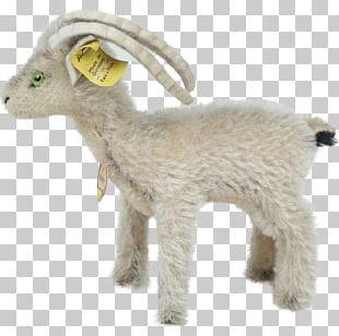 Sheep Goat Fur Terrestrial Animal Snout PNG