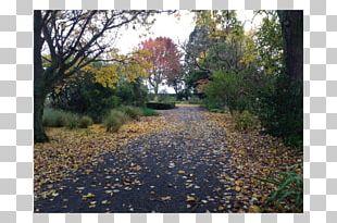 Landscape Garden Land Lot Painting Autumn PNG
