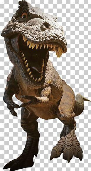 Tyrannosaurus Dinosaur Spinosaurus Giganotosaurus Velociraptor PNG