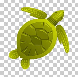 Turtle Aquatic Animal Sea PNG