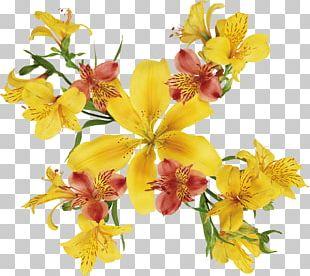 Watercolor: Flowers Painting Flowers Lilium PNG