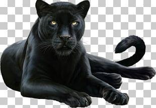 Black Panther Leopard Felidae Cougar PNG