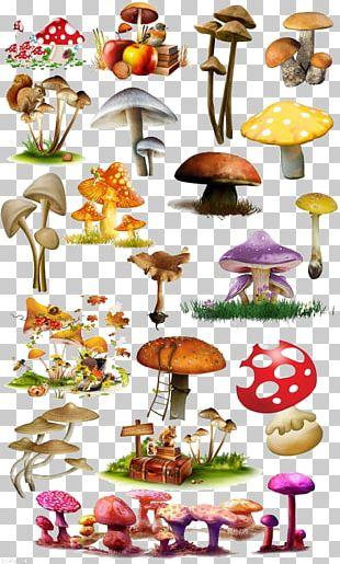 Mushroom Fungus Illustration PNG