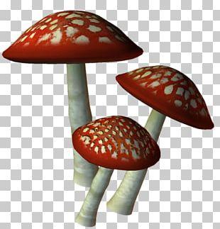 Mushroom Marasmius Oreades Encapsulated PostScript File Formats PNG