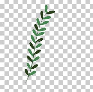 Leaf Computer Icons Plant PNG