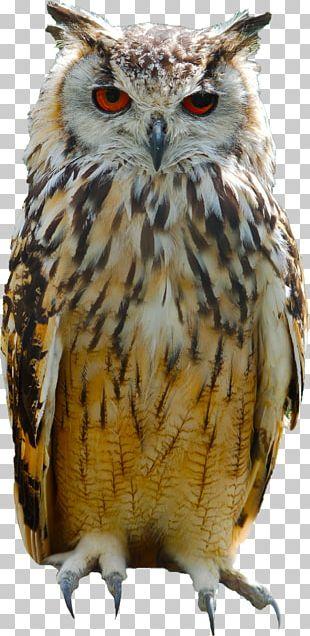 Great Horned Owl Bird Eurasian Eagle-owl Columbidae PNG