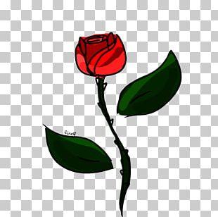 Garden Roses Tulip Petal Plant Stem PNG