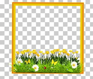 Common Sunflower Floral Design Meadow Cut Flowers PNG