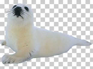 Climope Earless Seal Sea Lion Aquatic Animal PNG