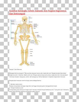 Human Musculoskeletal System Homo Sapiens Human Skeleton Human Body Muscular System PNG