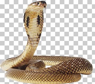 Snake Green Anaconda PNG