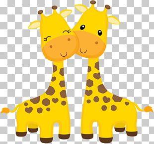 Okapi Baby Giraffe Open Northern Giraffe PNG