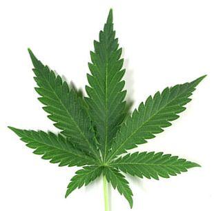Cannabis Cup Cannabis Sativa Medical Cannabis PNG