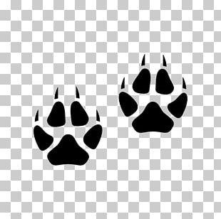 Arctic Fox Red Fox Cat Footprint Animal Track PNG