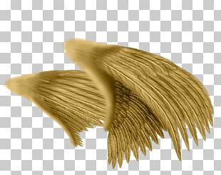 Drawing Angel Feather Photography PNG