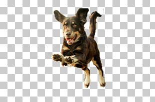 Dog Puppy Runs PNG