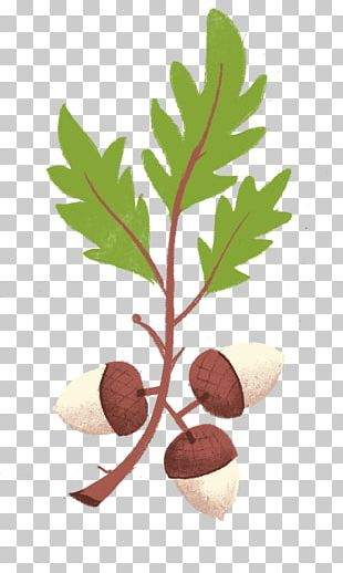 Tree Nut Allergy VY2 Flowerpot PNG