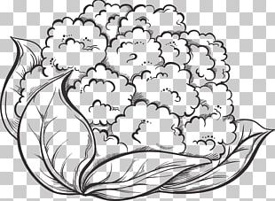 Cauliflower Drawing Vegetable Broccoli PNG