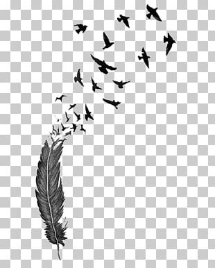 Bird Feather Tattoo Drawing PNG